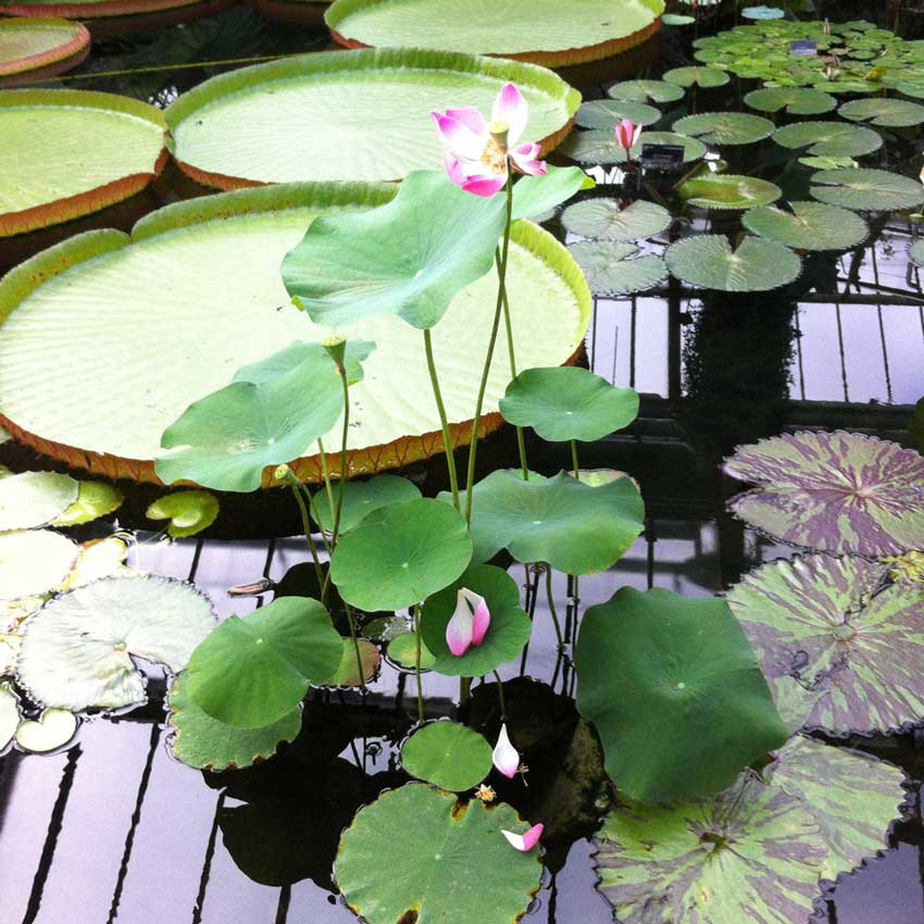 Inspirational orchids & waterlilies - Tiffany Scull