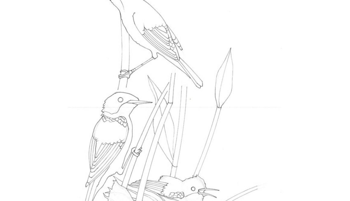 Reed Warbler - Tiffany Scull