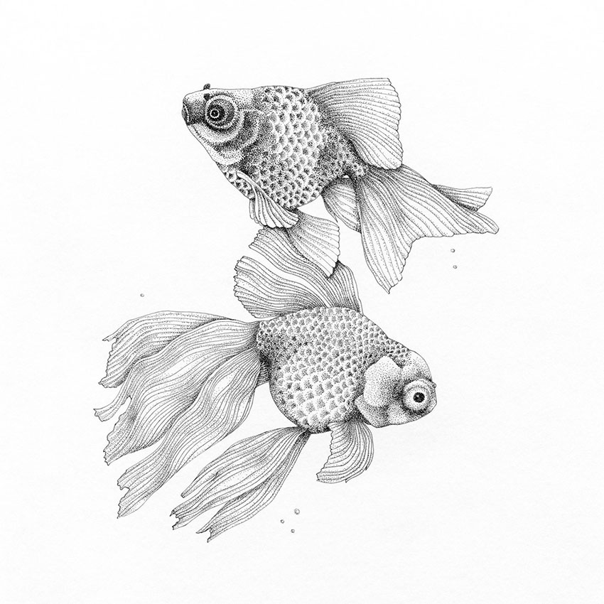 Watercolours & Ink Drawings - Tiffany Scull