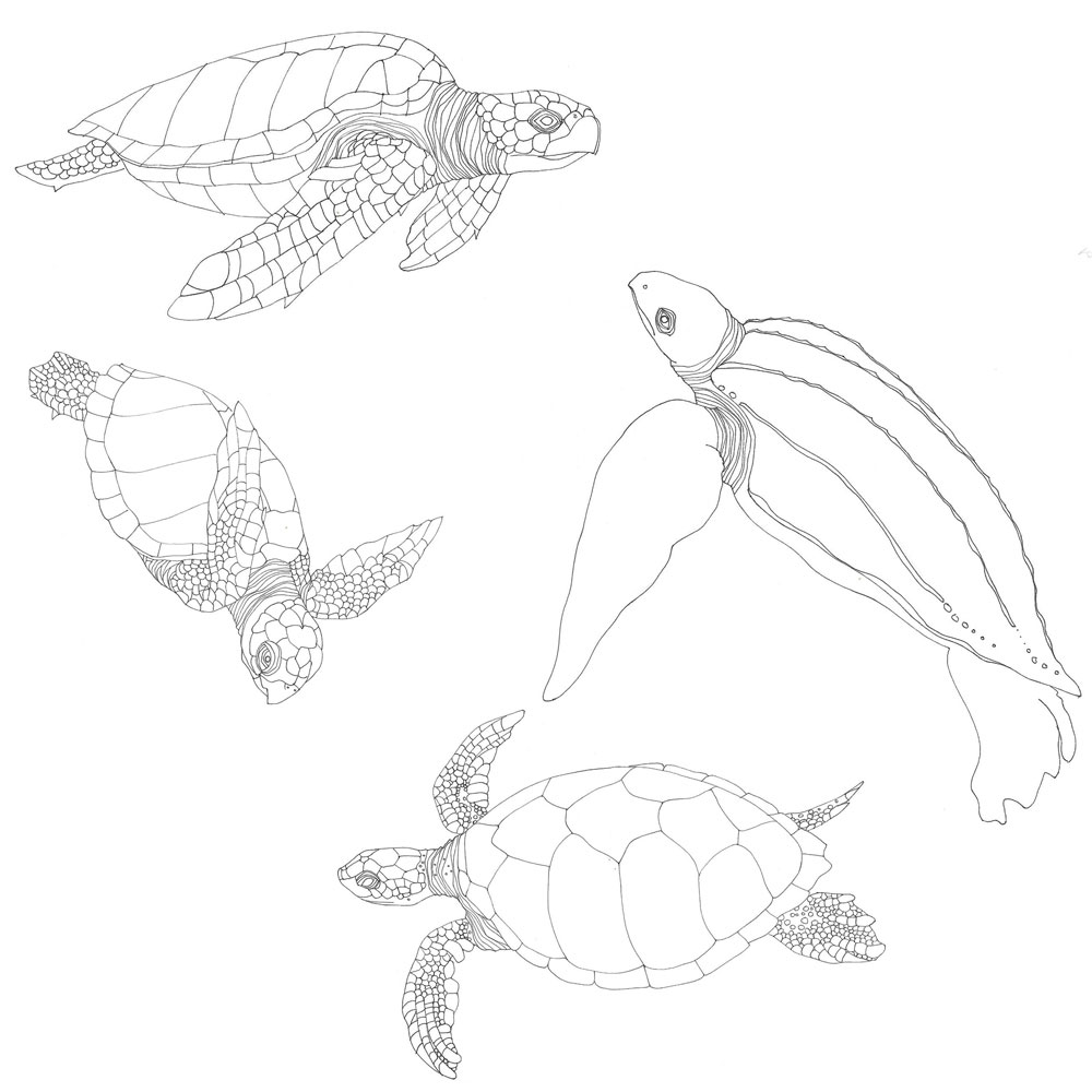 Sea Turtles and Seaweed - Tiffany Scull